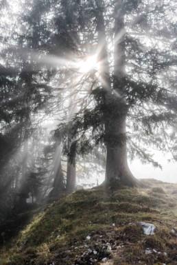 Sonnenlicht im Wald, bei Garmisch. Hochzeitsfotografin Veronika Anna Fotografie, bayerischer Wald.