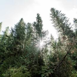 Wilde Wälder Kanadas, Reisebericht von Veronika Anna Fotografie Fotografin aus Bayern