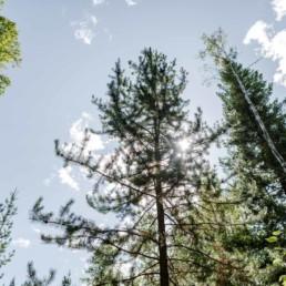 Baumwipfel in freier Natur. Bilder und Reisebericht von Veronika Anna Fotografie