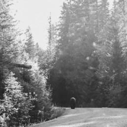Bär fotografiert auf Reisen in Kanada von Veronika Anna Fotografie.
