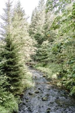 Naturbild im bayerischen Wald fotografiert von Veronika Anna Fotografie.