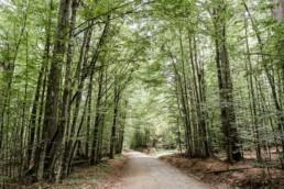 Naturbild im bayerischen Wald bei einer standesamtlichen Hochzeit.