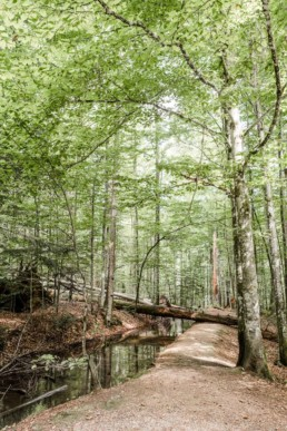Standesamt Wildnis im bayerischen Wald fotografiert von Veronika Anna Fotografie