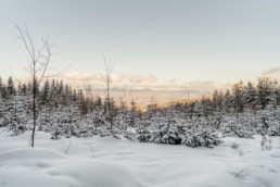 Natur Bild mit Ausblick auf dem bayrischen Wald mit Sonnenuntergang in Sankt Englmar Bäume Wald und Schnee fotografiert von Veronika Anna Fotografie