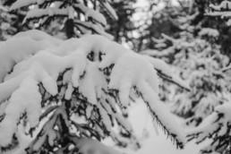 Natur Bild in schwarz-weiß von einem Schnee bedekten Baum im Wald in Sankt Englmar fotografiert von Veronika Anna
