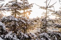 Naturbild vom bayerischen Wald mit Sonnenuntergang am Schnee shooting Tag von Veronika Anna Fotografie